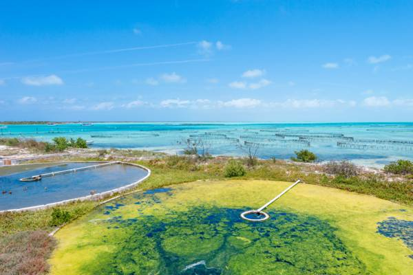 green algae vats for conch food at the Caicos Conch Farm