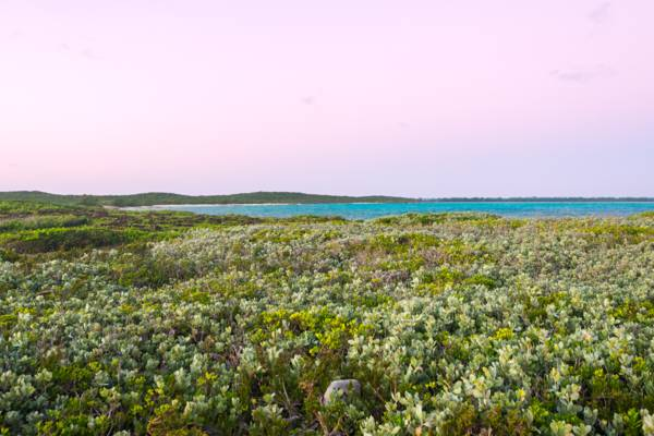 low coastal plants at dawn at Lorimer's Point on East Caicos