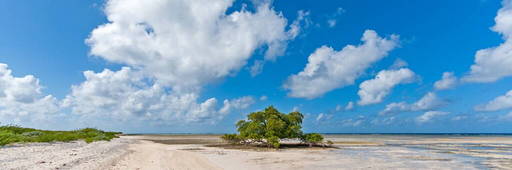black mangrove tree at the beach at North Creek Mouth