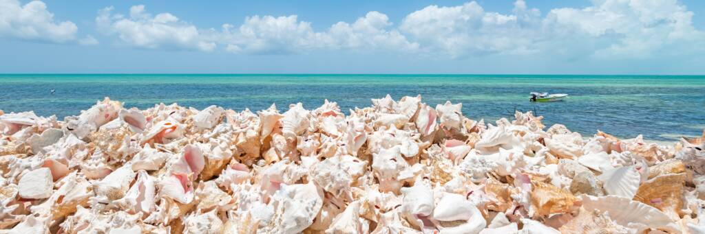 pile of discarded queen conch shells at Blue Hills on Providenciales