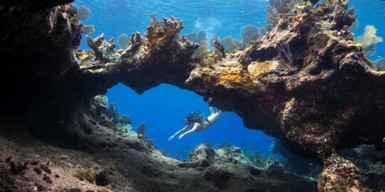 coral arch and snorkeler at Sellar's Cut, Turks and Caicos