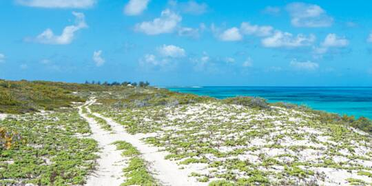 sandy coastal track on the dunes near Northeast Point on Salt cay