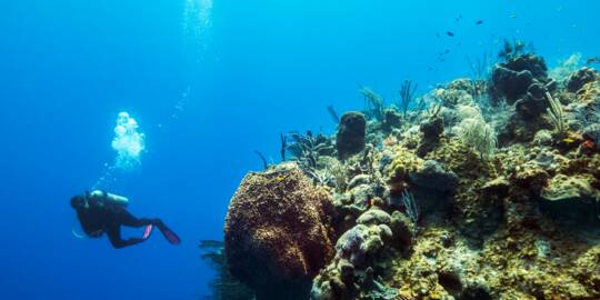 scuba diver at the wall on French Cay with coral and sea sponges