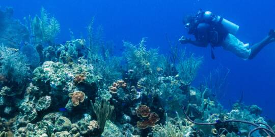 scuba diver at a vibrant reef at English Point on Grand Turk