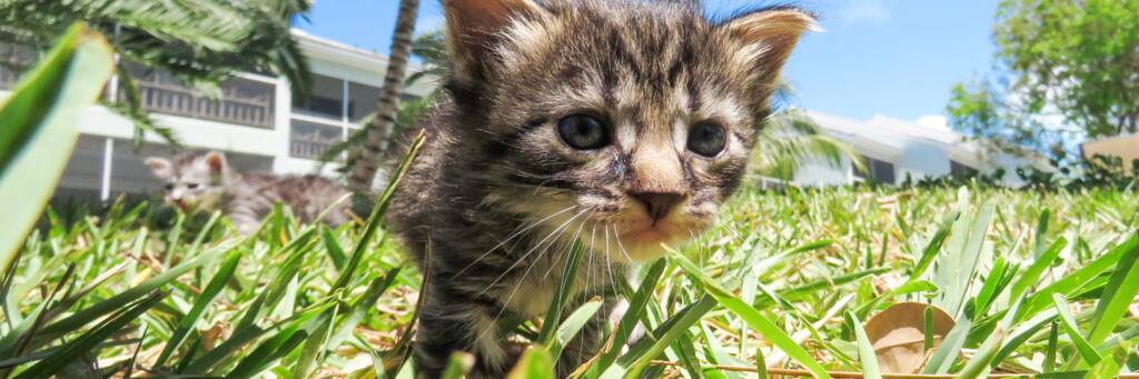 rescue kitten at TCSPCA