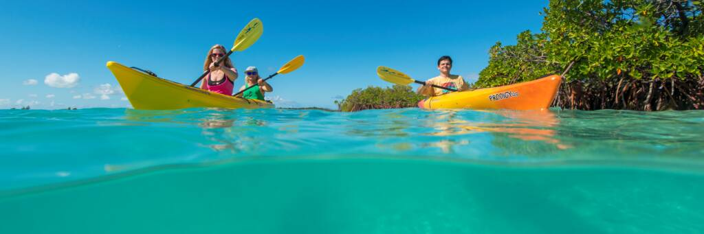 over-under photo of kayaks in turquoise ocean water and red mangroves trees