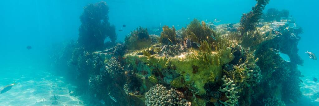 landing craft wreck covered in intricate coral in the Caicos Banks