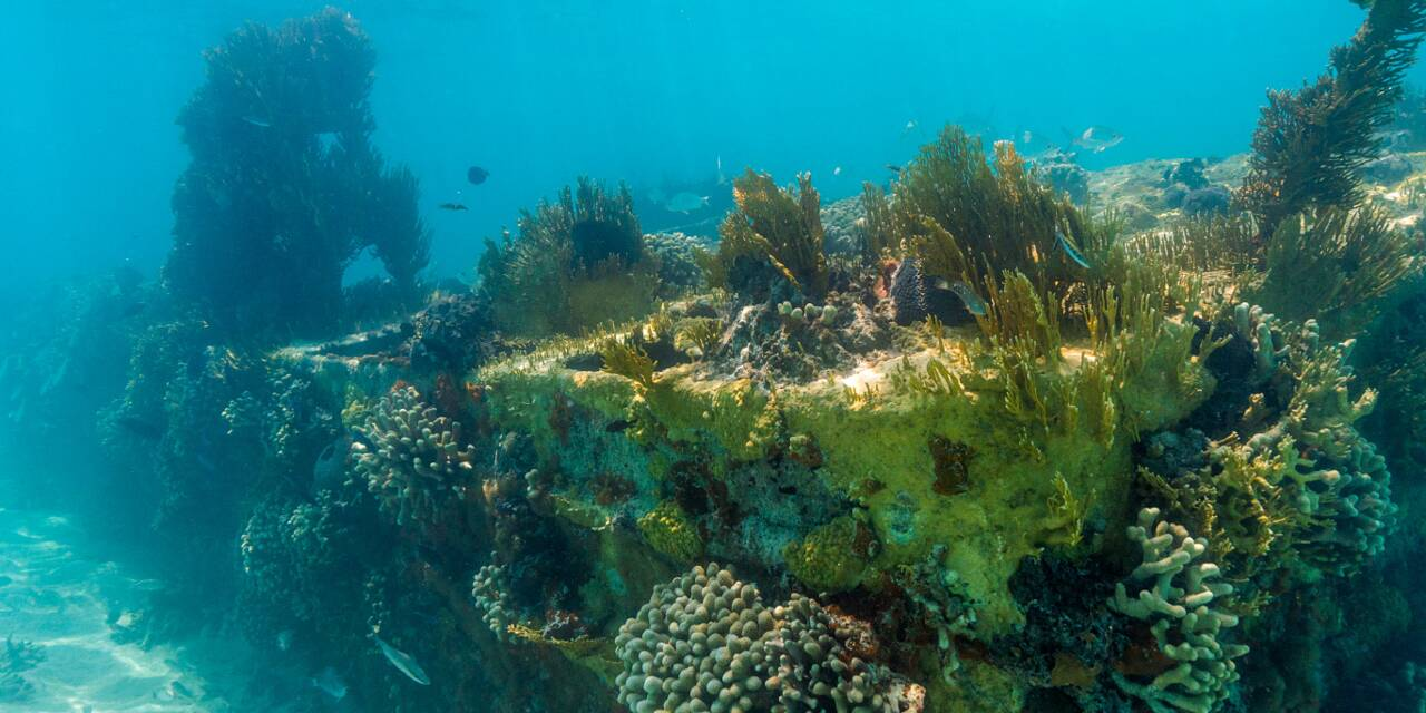 Wreck Diving In The Turks And Caicos Islands
