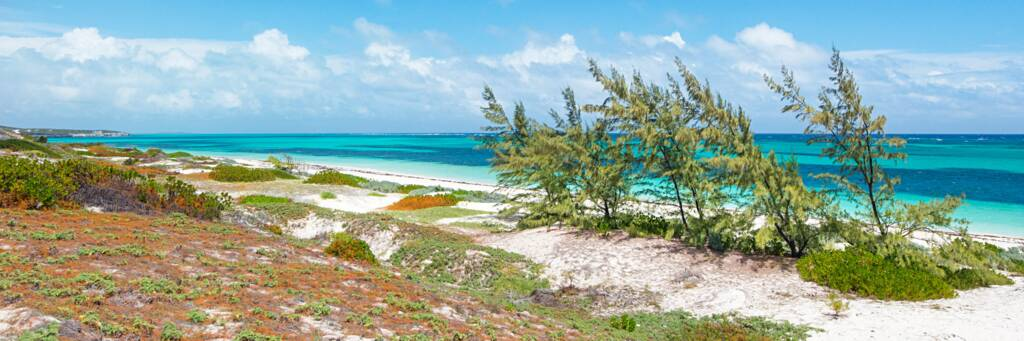 dunes and coastal vegetation at Long Beach on South Caicos