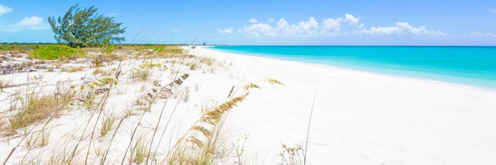 sea oats and white sand beach of Pine Cay