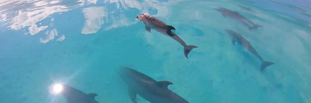 dolphins in the Turks and Caicos
