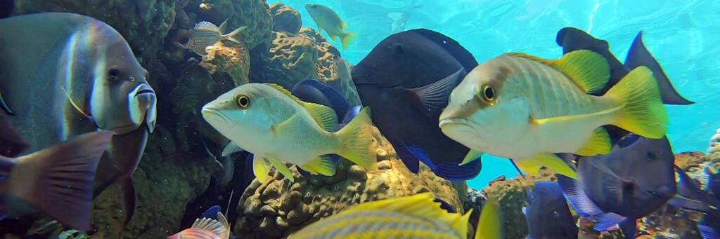 fish on a reef in the Caicos Banks.