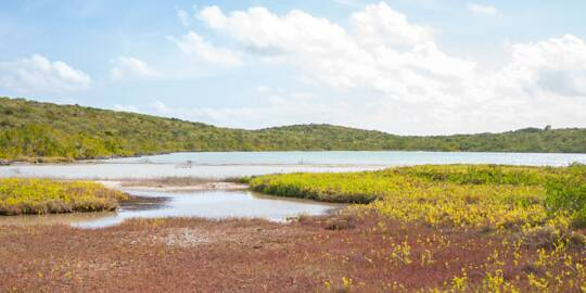 tidal pond in the interior of East Caicos