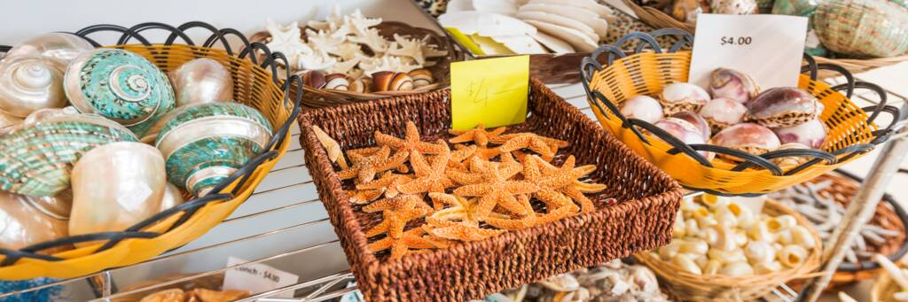 imported seashells and starfish for sale in the Turks and Caicos