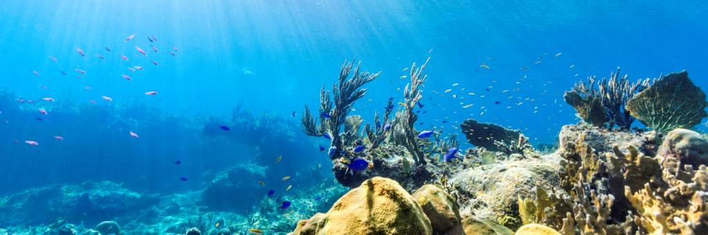 snorkelling at the barrier reef at Providenciales, Turks and Caicos.