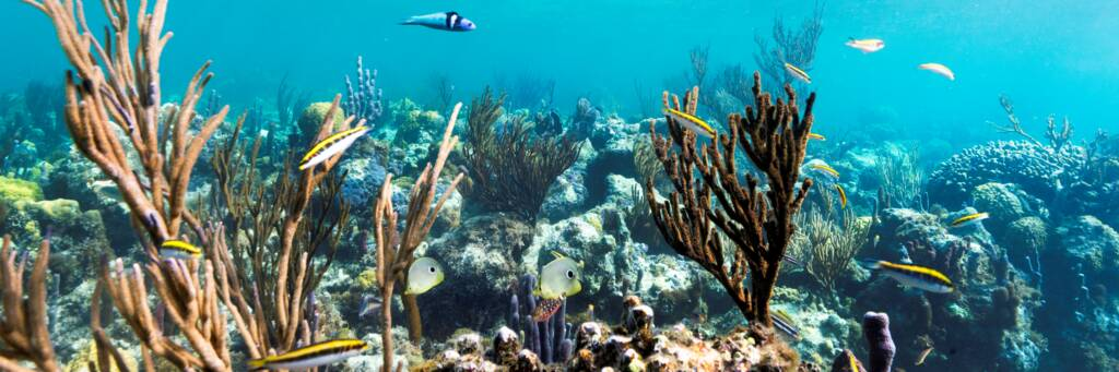 wrasse and soft coral at Smith's Reef in the Turks and Caicos