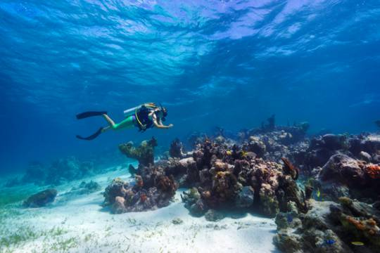 scuba diving at Smith's Reef off of Providenciales