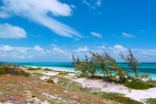 coastal dunes and casuarina trees at Long Beach on South Caicos