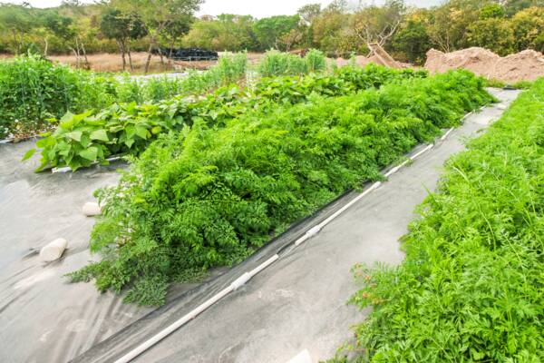 farming in Turks and Caicos