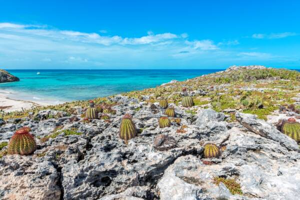 Turks Head Cacti on Fish Cay in the Turks and Caicos.