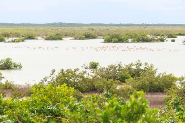 Flamingo Pond Overlook