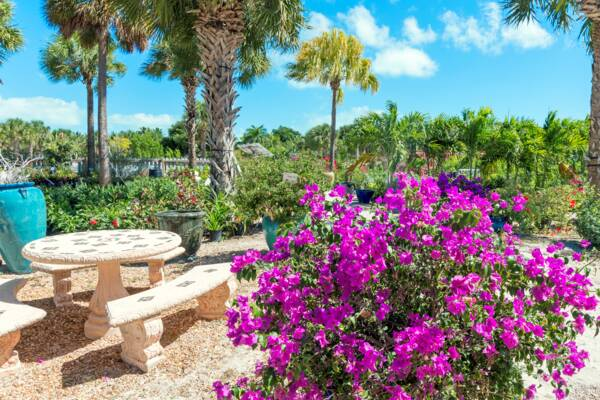 flowers in Turks and Caicos