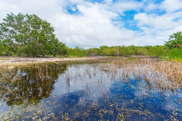 a fresh water pond near a Lucayan village site on Middle Caicos