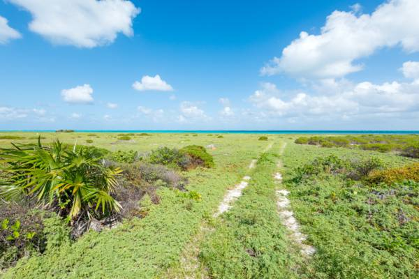 beach track through the coastal vegetation at Haulover Point