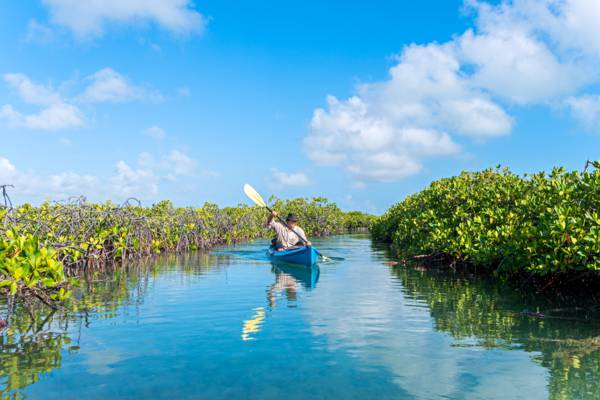 kayaking in the red mangrove channels off Middle Caicos