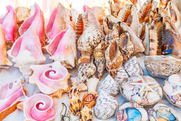 shells for sale in Grace Bay