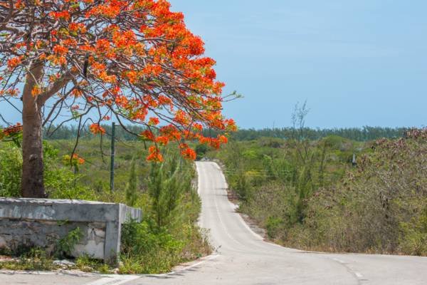 the central road through the settlement of Bambarra on Middle Caicos