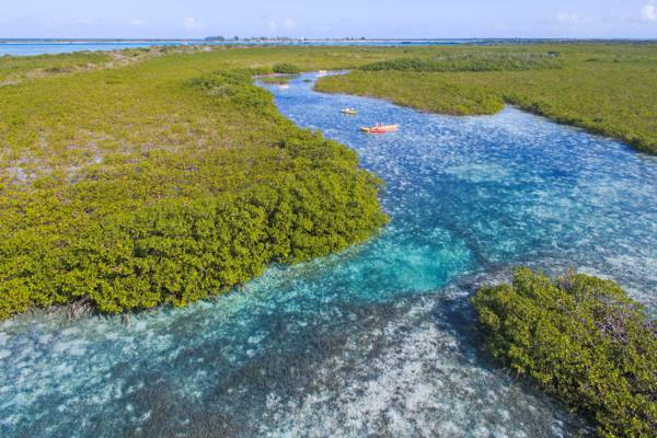 the tidal channel into the red mangrove forests of Mangrove Cay in the Turks and Caicos