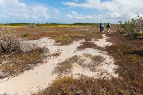 hiking on the saline tundras of East Caicos