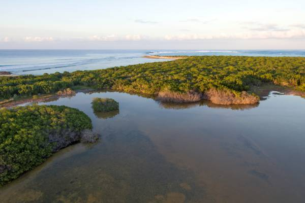 the sheltered Northwest Point Pond Nature Reserve on Providenciales