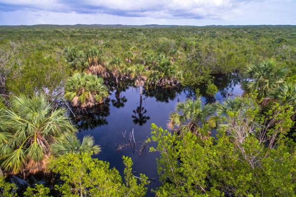 fresh water oasis and sabal palms in the Frenchman's Creek Nature Reserve on Providenciales