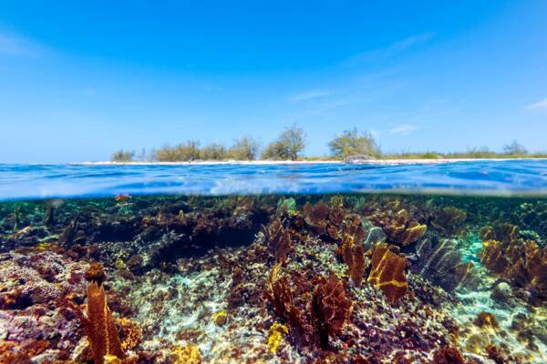 beautiful snorkeling reef with yellow sea fans off a beach on Grand Turk