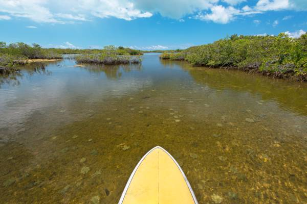 stand up paddle boarding in the sheltered mangrove waterways of the Frenchman's Creek Nature Reserve