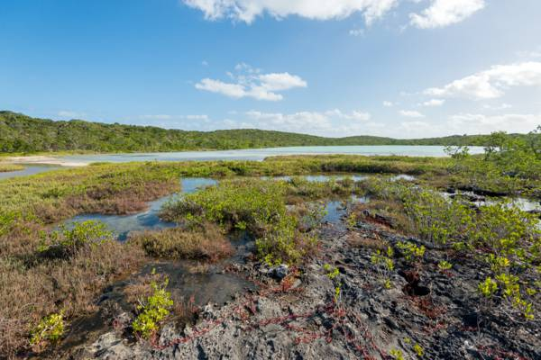 interior tidal wetlands on East Caicos