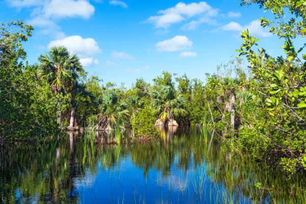 a fresh water pond with sabal palms and saw grass in the Frenchman's Creek Nature Reserve
