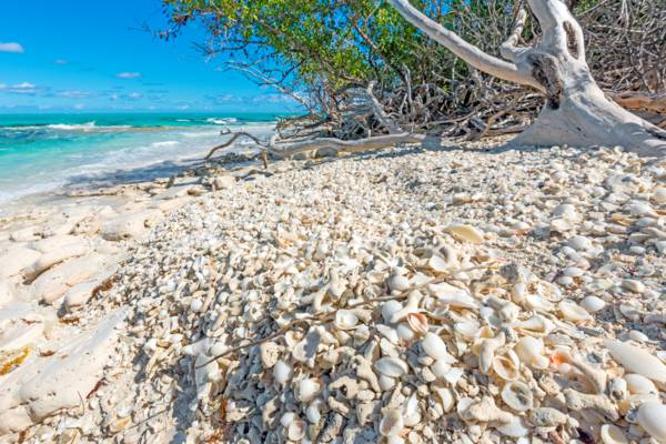 seashells deposited on a beach on a secluded cay in the Turks and Caicos