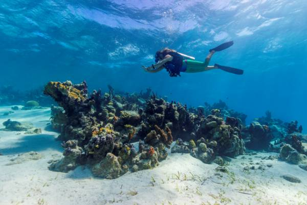 scuba diving at the Smith's Reef beach reef on Providenciales