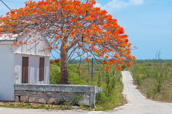 tree at Bambarra in Turks and Caicos
