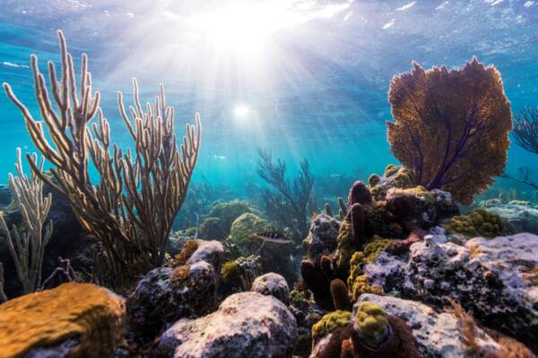 beautiful snorkeling reef with soft corals at Smith's Reef in the Turks and Caicos