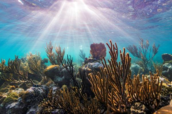 sunlight filtering through the water at the Smith's Reef snorkeling site on Providenciales