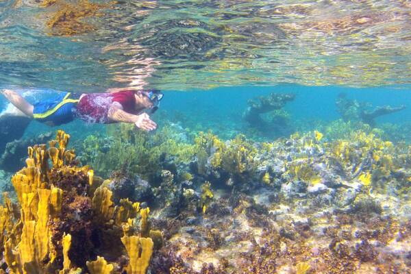 snorkeler with firecoral on the barrier reef off of Providenciales