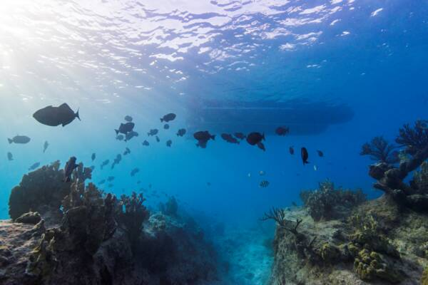 fish at the barrier reef near Leeward on Providenciales