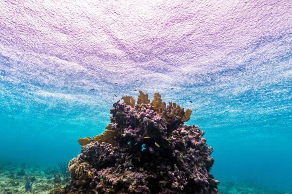 snorkeling at a coral head near the Providenciales barrier reef in the rain