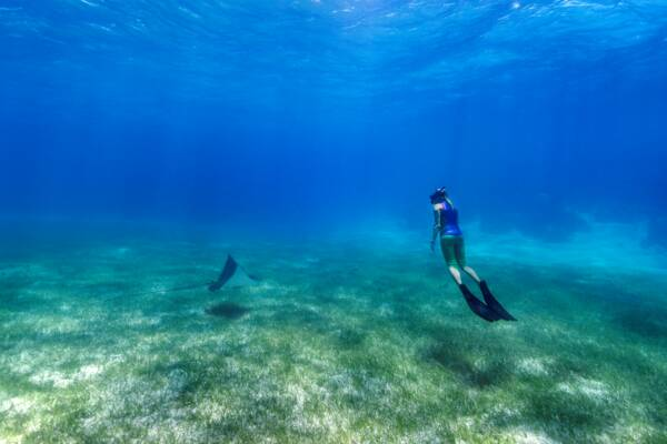 snorkeler at Smith's Reef with eagle ray