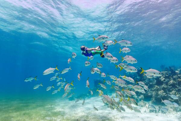 snorkeler with a school of horse-eye jack fish at Smith's Reef off Providenciales