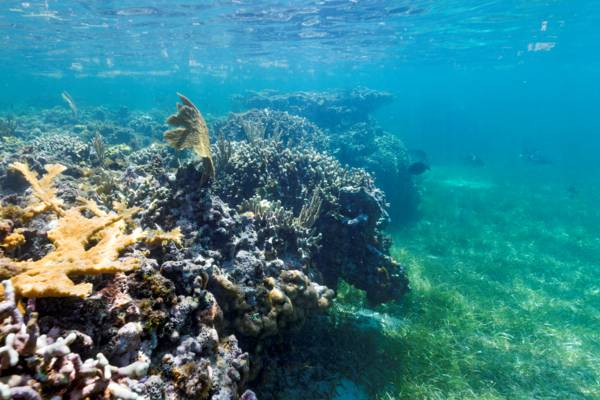 snorkelling reef at Grand Turk